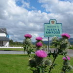 Thistles growing outside Moor of Rannoch Hotel